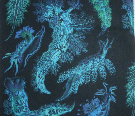 nudibranch cyaninvert