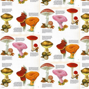 Vintage Fungi Chart