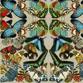 Rbutterflies2_shop_thumb