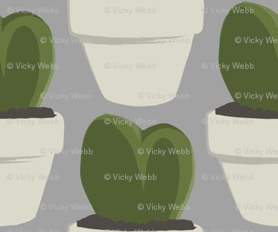 Heart Cacti (Hoya)