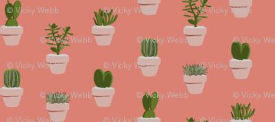 Cacti and Succulents (original)
