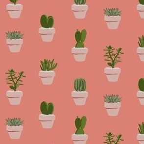 Cacti and Succulents (original)