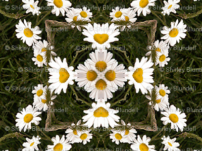 Daisies in the grass 2