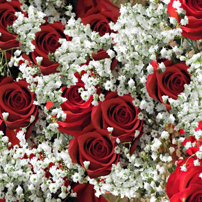 Roses and Baby Breath