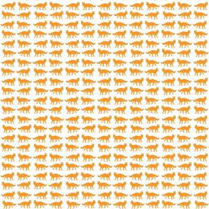 orange fox vertical