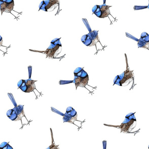 Blue Wrens on White, Bias Larger