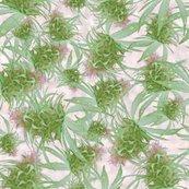 Rrrrrrrcannabispinkbudspf_shop_thumb