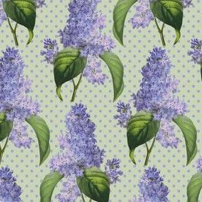 Redouté lilacs