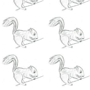 Biro Squirrel