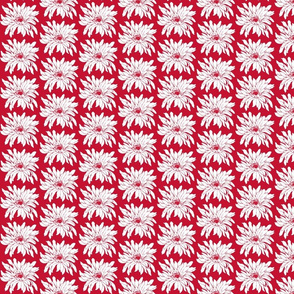 vanilla_daisy red and white
