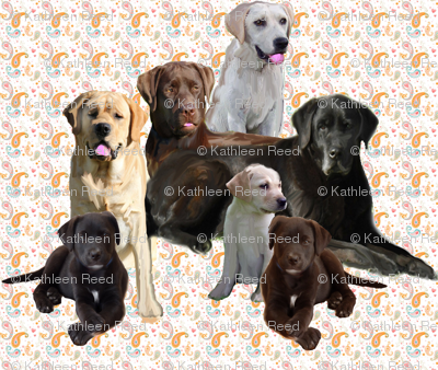 labrador retriever mural