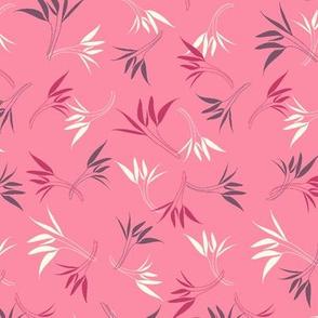 Hyacinthe 3