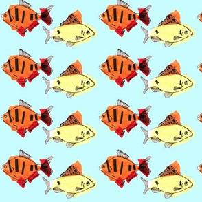 Yellow fish, orange fish