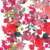 Antique Roses/Floral on White