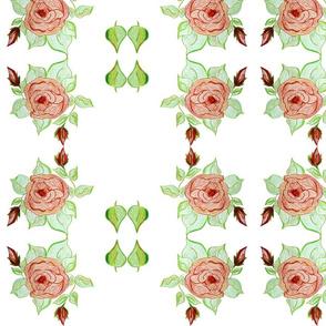 Majestic Beauty Rose
