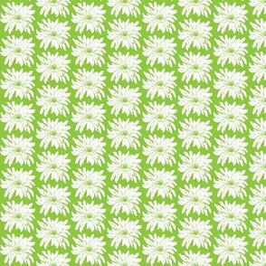 vanilla_daisy  green and white