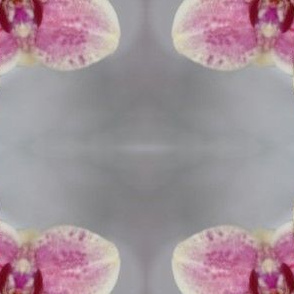 Creamy Pink Orchid Fabric