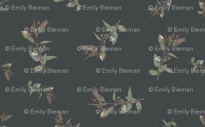 Eucalyptus ficifolia foliage spaced on  424747