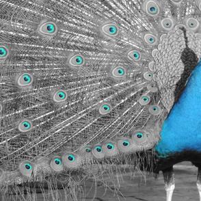 eyeing up the blue bird