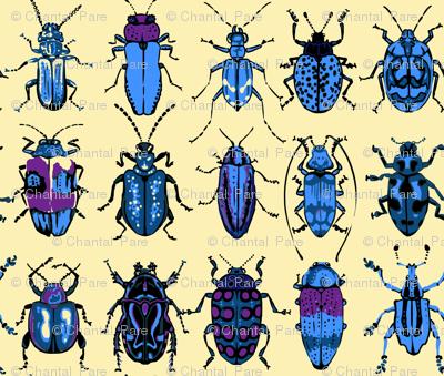 Beetle Dormitory