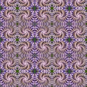 Spiral Beauty.