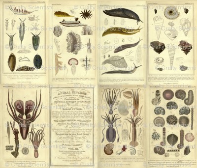 Cuvier animal plates
