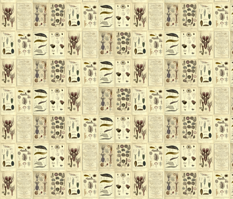 Cuvier animal plates fabric by craftyscientists on Spoonflower - custom fabric