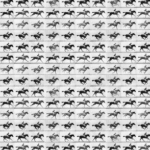 Muybridge Gallop (original)