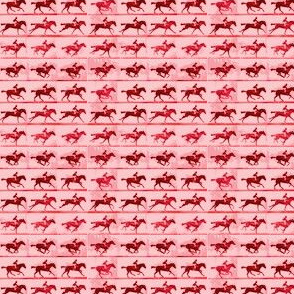 Muybridge Gallop (rose)