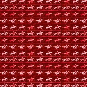 Muybridge Gallop (cinnabar)
