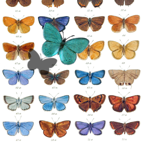 Papilio ~ White fabric by peacoquettedesigns on Spoonflower - custom fabric