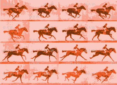 Muybridge Gallop (salmon)