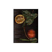 Botanical Citrus Orange