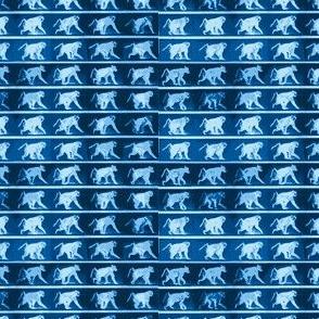 Muybridge Scamper (indigo)