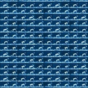 Muybridge Crawl (indigo)