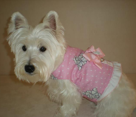 Girlie Girl Maltese on Diamonds