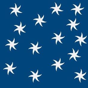 starfish_navy
