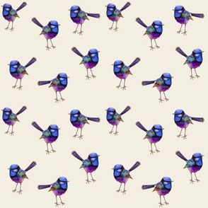 Royal Purple Wren, Smaller