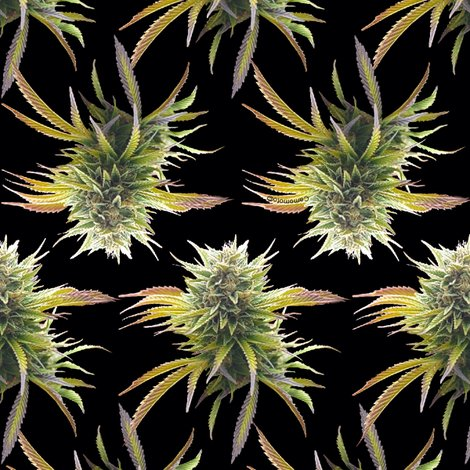 Rmarijuanabudsonblack_rspf_shop_preview