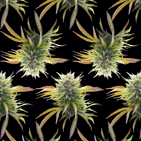 Marijuana Buds on Black fabric by camomoto on Spoonflower - custom fabric
