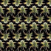 Rmarijuanabudsonblack_rspf_shop_thumb