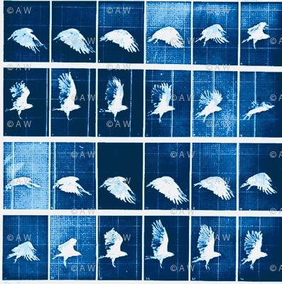 Muybridge Flap (indigo)