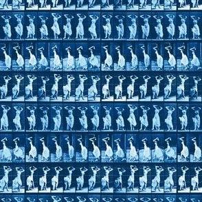 Muybridge Wiggle (indigo)