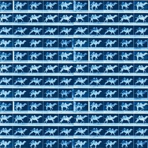 Muybridge Galumph (indigo)