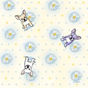 14_french_daisies_small3_shop_thumb