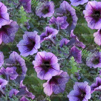 Purple Plum Petunias