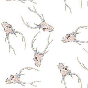 Deer Skulls Scattered on White