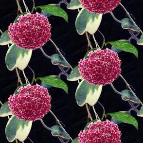 Flower by E. Ross