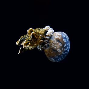 Jellyfish Freefall