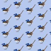 Wren 02 on Periwinkle Blue